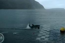تصویر از فیلم | مسابقه تماشایی قهرمان شنای جهان با یک کوسه سفید