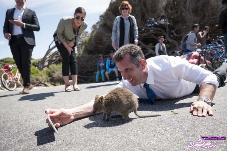 تصویر از تصاویر | سلفی عجیب وزیر گردشگری استرالیایغربی با یک کوئوکا