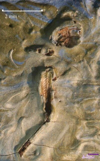 تصویر از یک کشف عجیب در نقاشی ونگوک