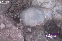 تصویر از فیلم | پیداشدن نارنجک در زمین بازی بچهها در قصرشیرین