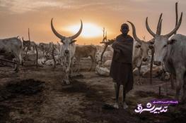 تصویر از تصاویر | روزگار مرموز گلهداران یک قبیله در سودان