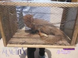 تصویر از اقدام زیست محیطی و شایسته شهروند خرم آبادی