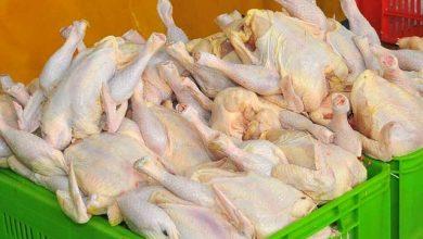 تصویر از معاون وزیر جهاد کشاورزی: مرغ ارزان می شود