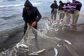 تصویر از تورهای آبی نسل ماهیان گیلان را نابود می کند