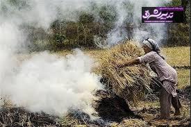 تصویر از آتش زدن کاه و کلش اقدامی باخت-باخت در گیلان