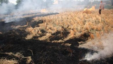 تصویر از جریمه و حبس برای آتش زدن بقایای برنج در شالیزارها