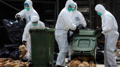 تصویر از مدیرکل دامپزشکی گیلان خبر داد:مشاهده آنفولانزا فوق حاد پرندگان در بعضی مناطق گیلان/از بین رفتن هزار قطعه طیور بومی