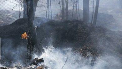 تصویر از آتش سوزی حدود ۷۲ ساعته جنگل های گیلان مهار شد
