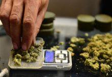 تصویر از چرا کرونا قیمت مواد مخدر را افزایش داده؟