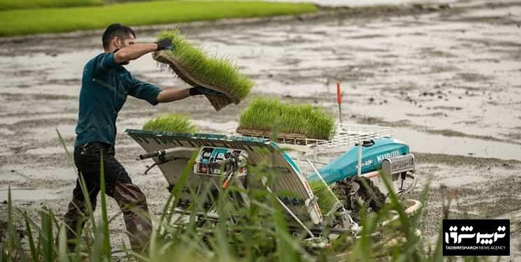 نشاءمکانیزه برنج