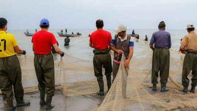 تصویر از صید ۱۲۰ تن ماهی کیلکا در استان گیلان