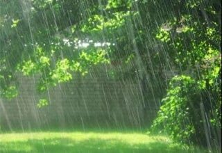 تصویر از مدیرعامل شرکت آب منطقه ای گیلان اعلام کرد:میانگین بارش ۷۱ میلی متری باران در ۴۸ ساعت گذشته در گیلان