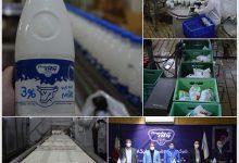 تصویر از پنیر سیاهمزگی محصول جدید پگاه | فاز شیری دامپروری صنعتی پگاه افتتاح میشود