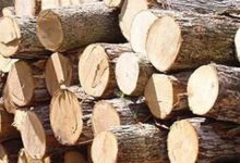 تصویر از نقش مؤثر طرح تنفس جنگل در ساماندهی زراعت چوب
