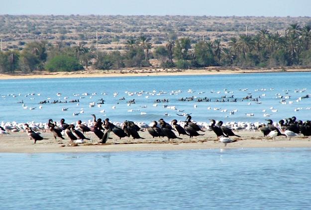 الحاق پارک ملی بوجاق کیاشهر به منطقه آزاد تجاری بندرانزلی