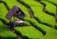 نوبت بندی آب کشاورزی