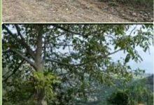 اراضی جنگلی